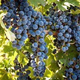 FlowNa智慧农业葡萄园项目物联网解决方案