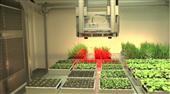 PlantScreen高通量植物表型成像分析系统(XYZ三维成像版)